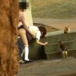 【青姦隠撮動画】野良猫が多数住み着く公園で女子校生カップルがネコに見せつけるように青姦セックスしてる件ww